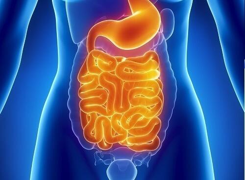 美と健康の鍵は腸にあった!!胃腸の毒素を取り除き体内をキレイにする方法とは!?