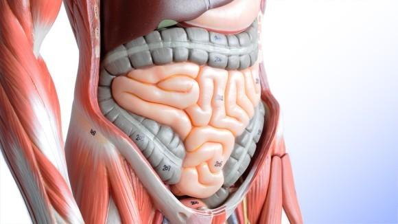 腸は第2の脳!!知っておきたい腸に関する10の豆知識!