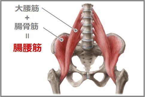 「腸腰筋「」の画像検索結果