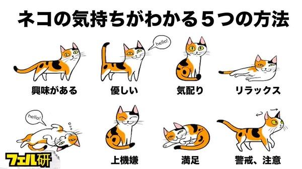 猫の気持ち!猫は今何を思っているの?ネコの気持ちがよくわかる5つの方法とは!?